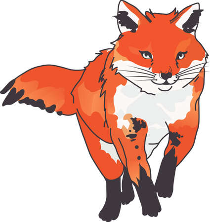 The mischievous look on the red fox