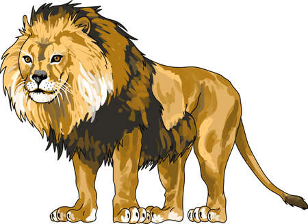 This beautiful lion is perfect for your classroom.  Include this lion when decorating.  The students will love it!