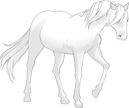 colt: This graceful horse with the wind blowing its mane will be beautiful on a shirt, vest or jacket.   Illustration
