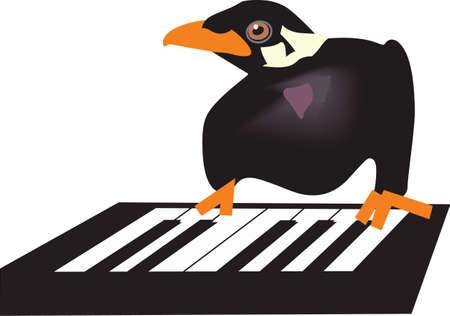 This mina blackbird is a fun companion repeating the words you say.