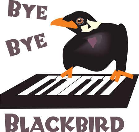 companion: This mina blackbird is a fun companion repeating the words you say.