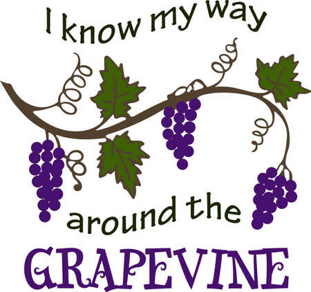 purple grapes: Whats your favorite wine Red, white or blush wines are perfect for your next Bunco party. They will love it!