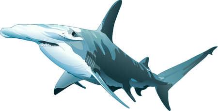 このシュモクザメは、海の家に最適です。 このデザインを追加あなたの。  イラスト・ベクター素材