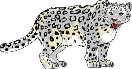 endangered species: This beautiful snow leopard is a perfect design to show you care for this endangered species. Illustration