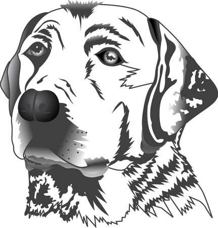 Mijn beste vriend is hard aan het werk voor mij. Toon iedereen hoeveel uw hond voor u betekent. Ze zullen love it!