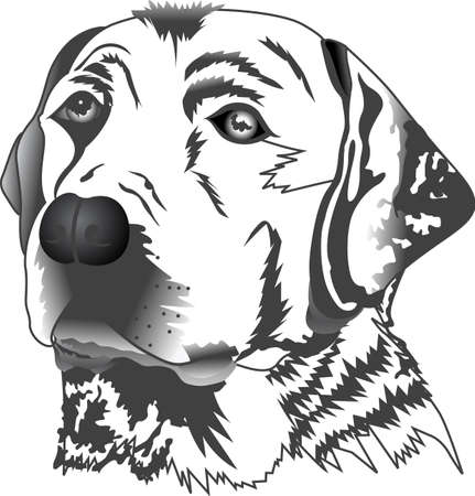 hard love: My best friend is hard at work for me.  Show everyone how much your dog means to you.  They will love it! Illustration