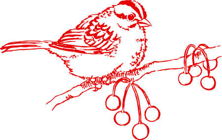 sparrows: Birds are fascinating animals.  This is a perfect gift for a favorite birder you know.  They will love it!