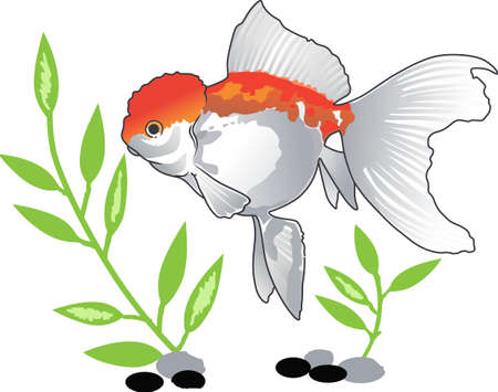 freshwater aquarium plants: Everyone enjoys the peaceful movements of a goldfish.  Pick these designs from Great Notions.