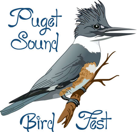 notions: The belted kingfisher is a cute bird.  Take him with you when you go birding.  A beautiful design from Great Notions. Illustration