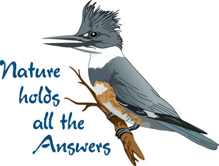 birdie: The belted kingfisher is a cute bird.  Take him with you when you go birding.  A beautiful design from Great Notions. Illustration