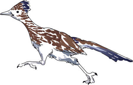 A roadrunner will be perfect for any nature lover.