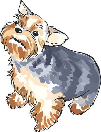 pure bred: A little yorkie is always near with this cute dog.