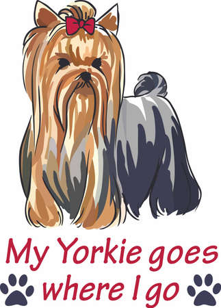 pure bred: Have a cute yorkie with you always with this little dog.