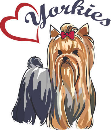 bred: Have a cute yorkie with you always with this little dog.