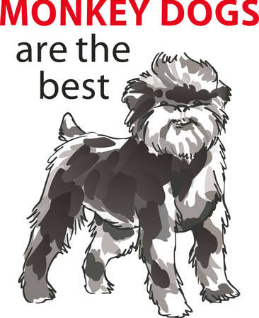 little dog: Have a affenpinscher with you always with this little dog.