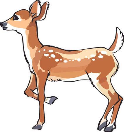 whitetail deer: Elegant wildlife for all nature lovers. Illustration