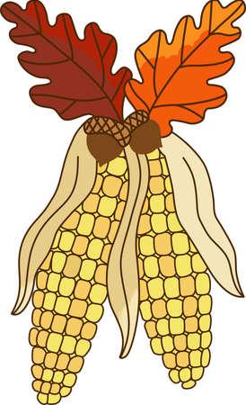 caes: Maíz y hojas de roble son perfectos para usted cae diseños de Acción de Gracias. Otro hermoso diseño de grandes conceptos. Vectores