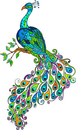 animal limb: A beautiful peacock is a great colorful decoration. Illustration