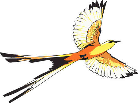 A beautiful scissortail flycatcher is admired by bird watchers. Ilustração
