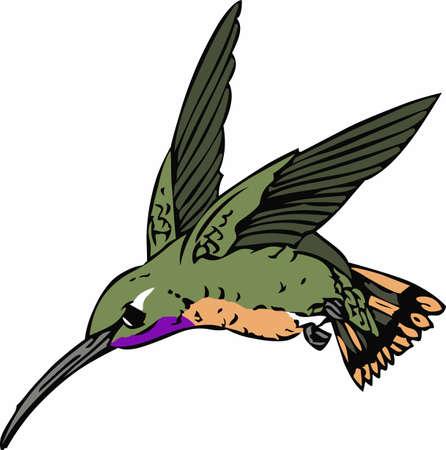 hummer: Add life to garden decor with a  hummingbird design.