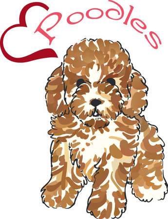 Have a little poodle with this cute dog.