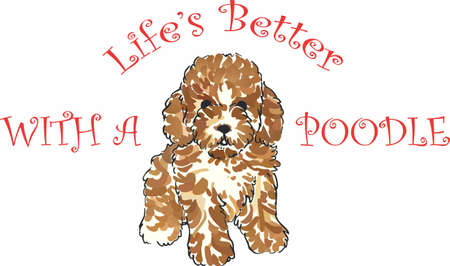 pure bred: Have a little poodle with this cute dog.