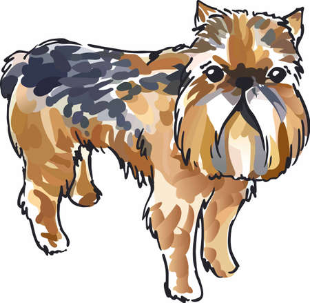 griffon bruxellois: Have a little brussels griffon with this cute dog.