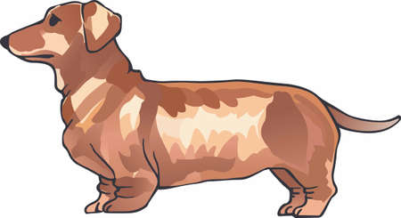 weiner: Have a dachshund with you always with this cute dog. Illustration