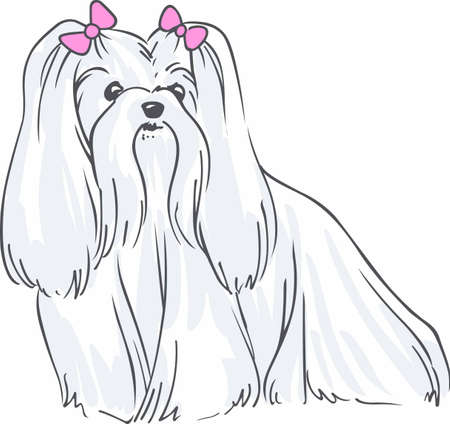 maltese dog: Have a maltese with you always with this cute dog. Illustration