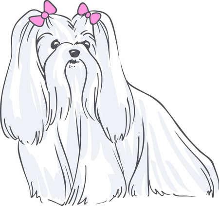 bred: Tener un malt�s con vosotros con este perro lindo. Vectores