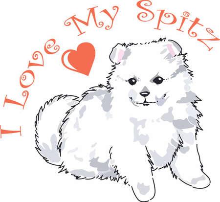 bred: Tener un perro de Pomerania lindo con usted dondequiera que usted vaya con este perro litte.