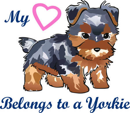 pure bred: Have a yorkie with you whereever you go with this litte dog.