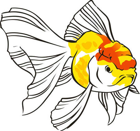 fantail: Beautiful goldfish are nice in ponds or aquariums. Illustration