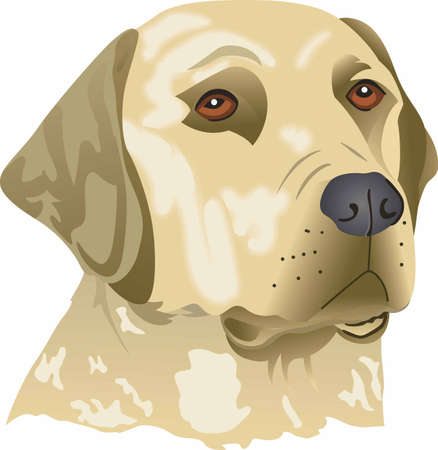 pure bred: My best friend is hard at work for me.  Show everyone how much your dog means to you.  They will love it! Illustration
