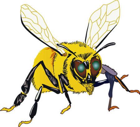Los apicultores están orgullosos de sus abejas y la miel. Foto de archivo - 45246042