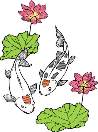 japanese koi:  Japanese Koi Illustration