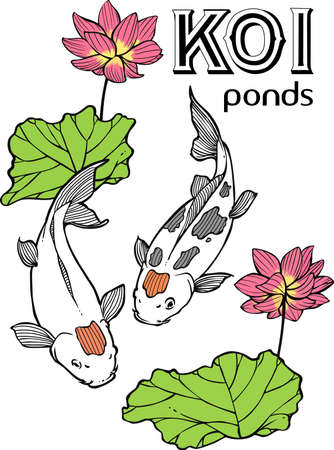 lily pad:  Japanese Koi Illustration