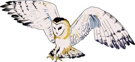 Bird watchers will love this flying owl.