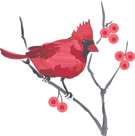 passerine: This beautiful Cardinal is the state bird for Virginia. Pick those designs by Great Notions! Illustration