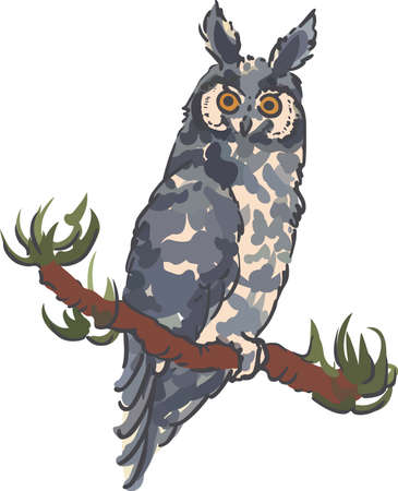 abyssinian: A wonderful owl is perfect for a nature lover.