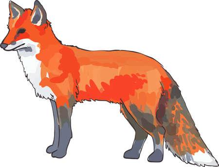 animal lover: Un zorro adorable ser� agradable para cualquier amante de los animales. Vectores