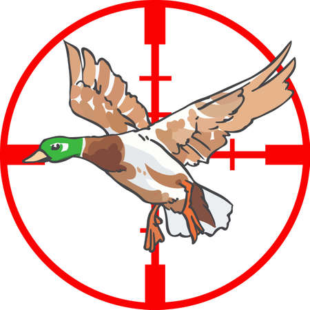 Hunters will love to have this duck in their sights.