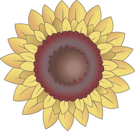 aster: Happy sunflowers are loved by all gardeners.