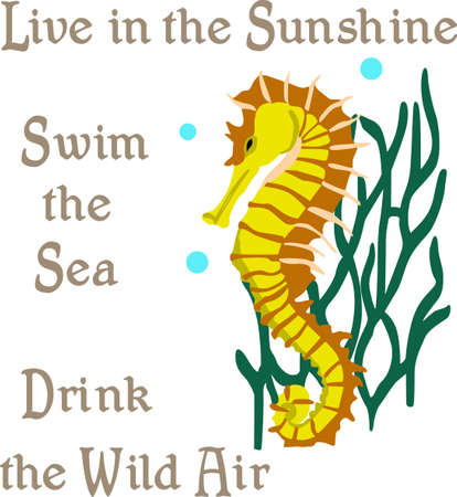 A beach towel or bag will look wonderful with a seahorse decoration.