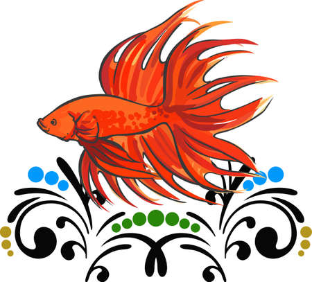 anyone: A fancy betta fish is a nice decoration for anyone. Illustration