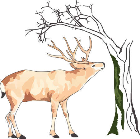 white tail deer: Life is simple, go hunting!  Get matching items for everyone in your group, they will love it!