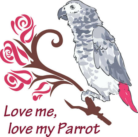 african grey: A beautiful parrot for a tropical themed project.