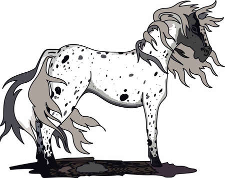 Horse lovers will enjoy a beautiful appaloosa.