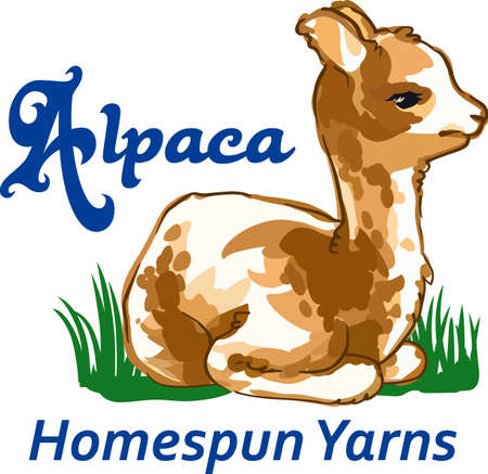 homespun: A lovely alpaca will be enjoyed by animal lovers.
