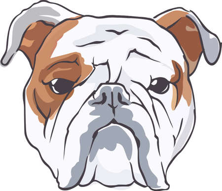 bred: A cute bulldog will be a nice friend for any dog lover. Vectores